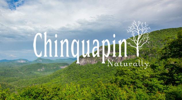 chinquapin